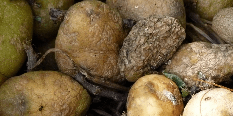 what is food loss and why does it matter